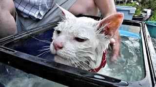 【地域猫】母がハクに言った一言が凄かった・・・【魚くれくれ野良猫】 thumbnail