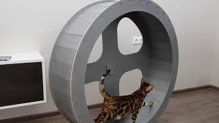 Беговое колесо для кошек Котолесо