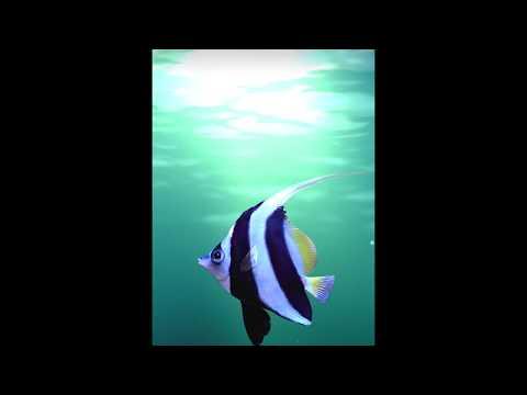Shark Bait Lockscreen Animation For Galaxy Themes