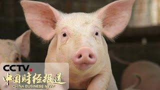 《中国财经报道》农业农村部:全国25省区非洲猪瘟疫区全部解除封锁 20190704 16:00 | CCTV财经