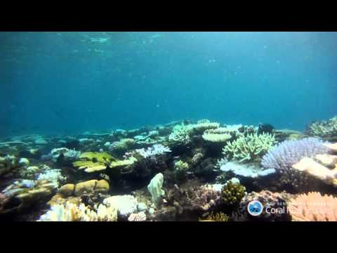 Underwater surveys of the northern Great Barrier Reef during