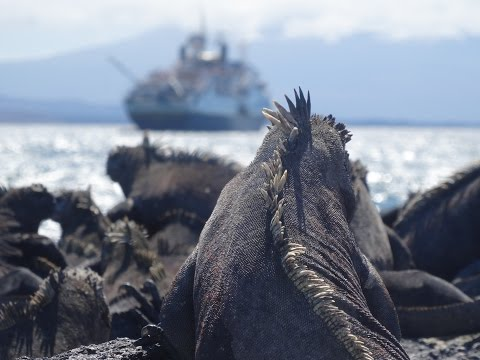 Galápagos Islands with Lindblad Expeditions & National Geogr