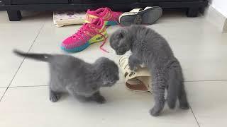 Забавные котята. Милые пушистики в Эмиратах.