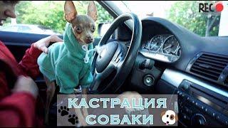 VLOG: КАСТРАЦИЯ СОБАКИ | СОБАКА ВЫХОДИТ ИЗ НАРКОЗА  | Оскар, русский той-терьере