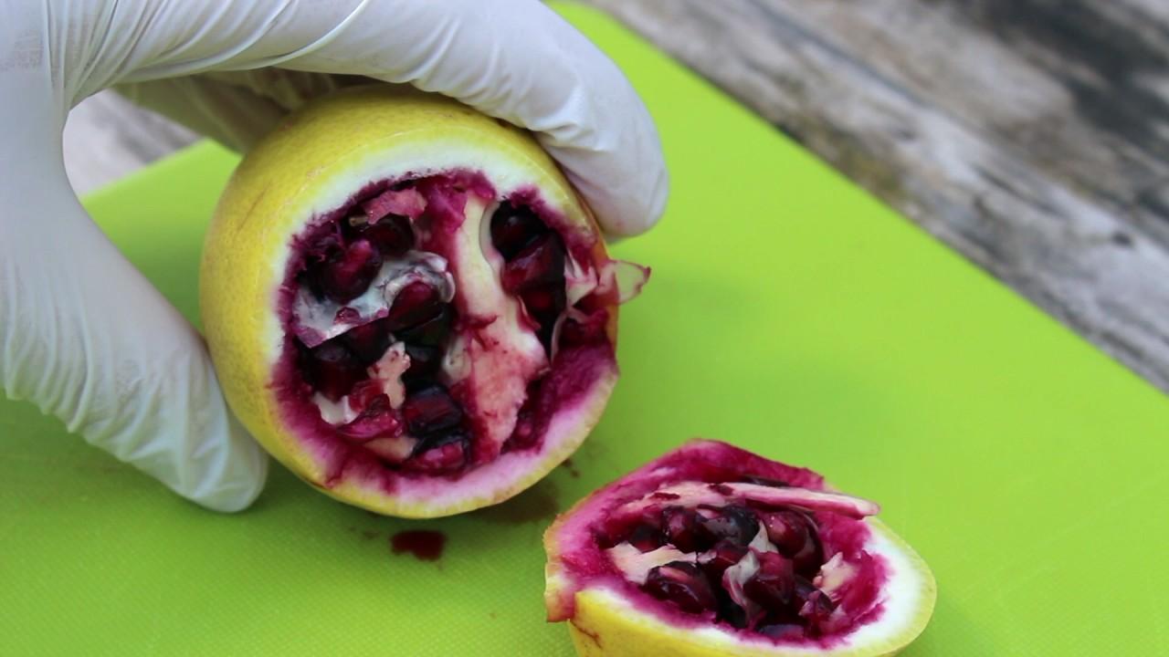 Kết quả hình ảnh cho pomegranate inside lemon