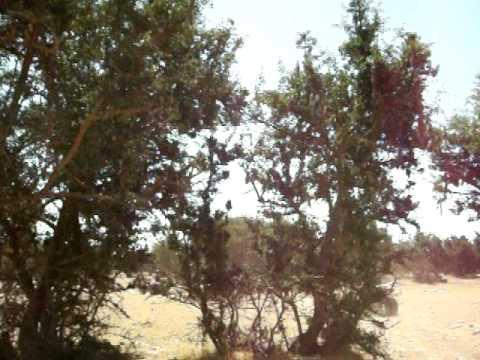 Quad à Agadir.