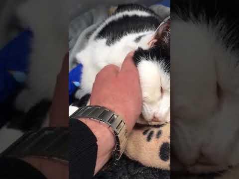 Baasje van neergeschoten kat in Geuzenveld: