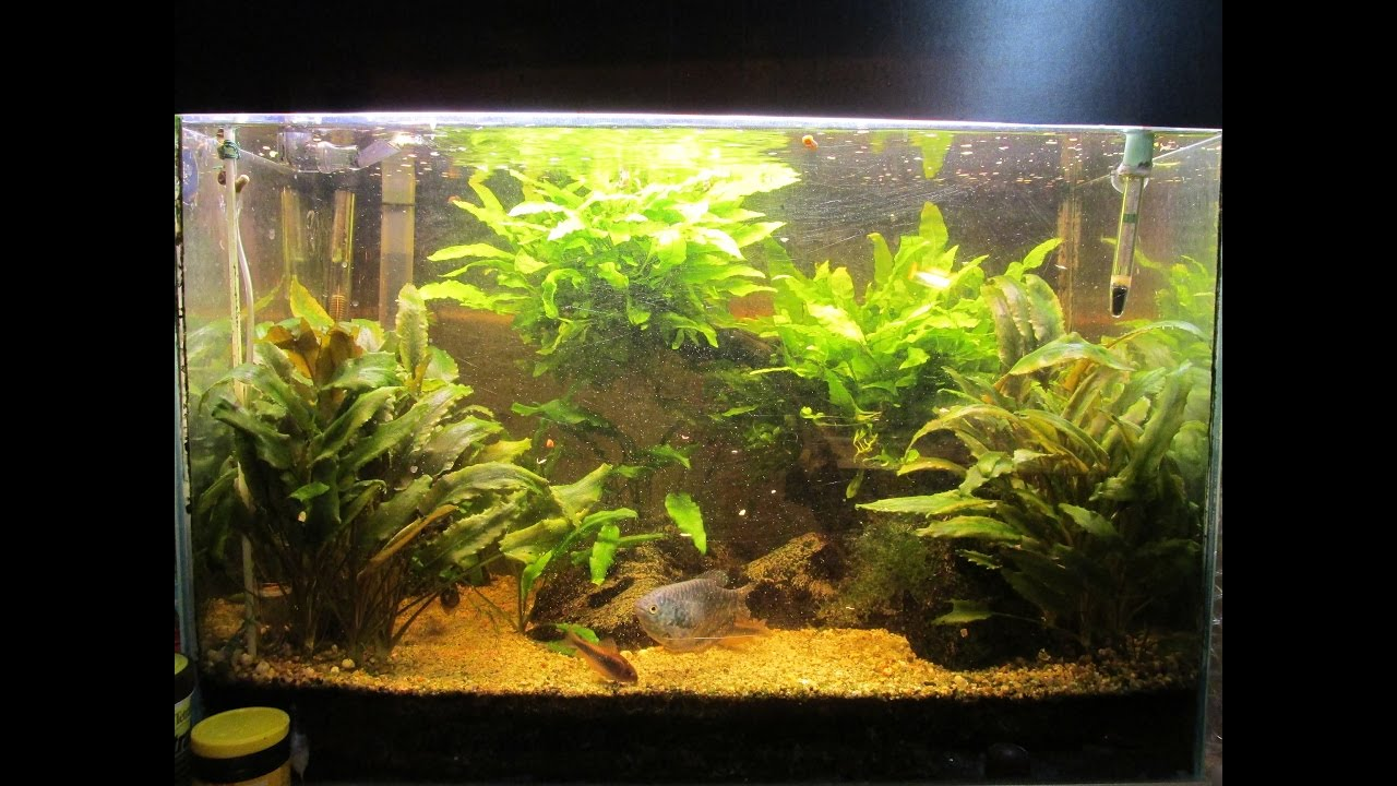 Plafoniera Led Acquario Dolce 150 Cm : Come costruire una plafoniera a led per acquario dolce