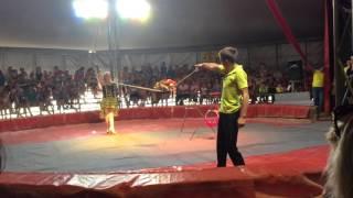 Цирк в Бугульме
