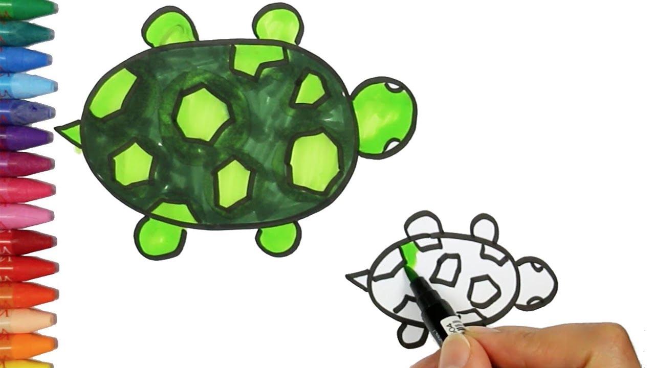 Wie man eine Schildkröte zeichnet - Zeichnen und Ausmalen für Kinder ...