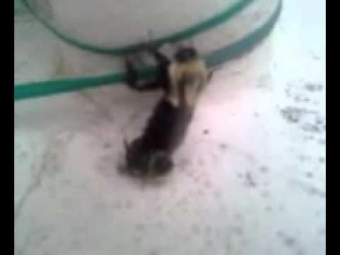 Bumble Bee Orgy Part II