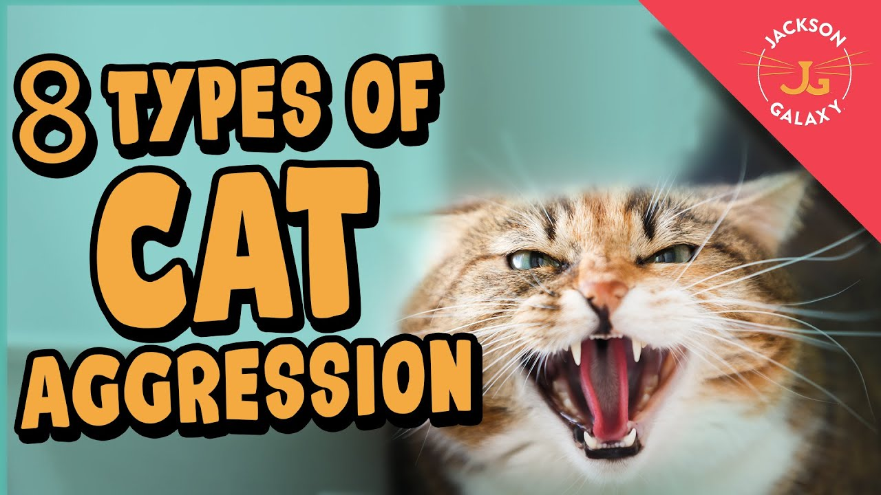 Cat Aggression Explained!