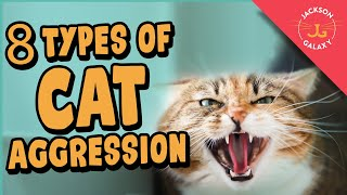 8 Types of Cat Aggression Explained!