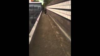 Cuz (a823073) - Adoptable Dog In Las Vegas