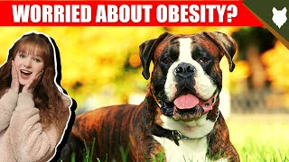 DO BOXER HAVE OBESITY PROBLEMS?