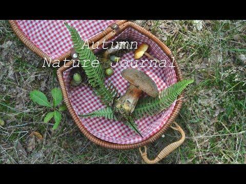 An Autumn Nature Journal Day