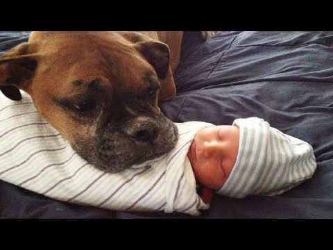 Cute Dogs watch over Newborn baby | Dog loves baby Video