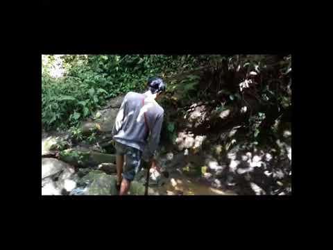 Trip Jungle Of Kalimantan,indoneaia_Hutan Kalimantan