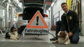 TCS-Test: Hitzefalle Auto