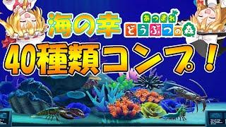 【あつ森】海の幸40種類コンプ!海の幸図鑑も紹介するよ!島民代表(笑)のあつま…