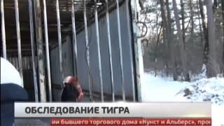 Обследование тигра. Новости. GuberniaTV