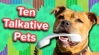 Ten Talkative Pets // Funny Animal Compilation