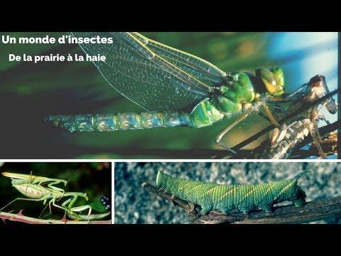 Les insectes - De la prairie à la haie - Un monde d