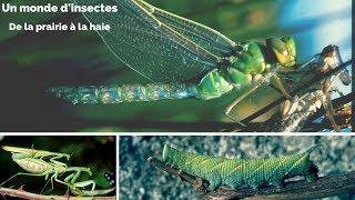 Les insectes - De la prairie à la haie - Un monde d'insectes