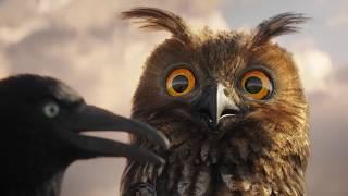 Lustige Vögel auf der Stromleitung - Teil 1