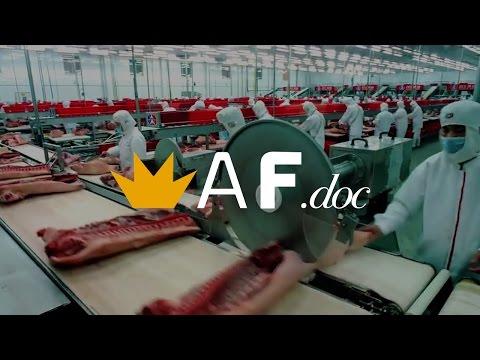 Verdades e Mentiras Sobre a Operação Carne Fraca   AF.doc
