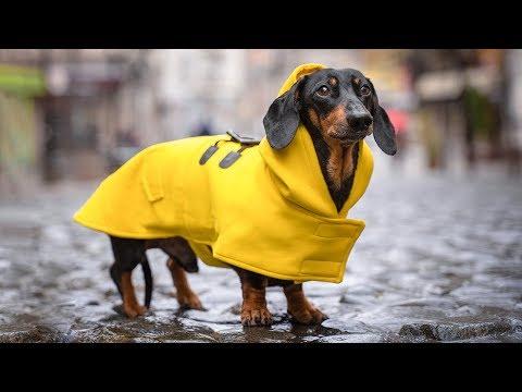 2 дня в дождливом Белграде! Визаран Черногория - Сербия!