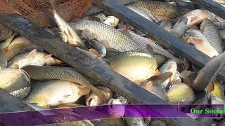 Amazing Fishing Videos 2018 | #Fish Catching By Fisherman | Big Fish #OurSocialVlogs -4
