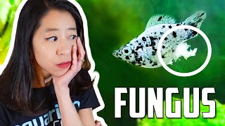 How to Fight Fungus on Aquariu…