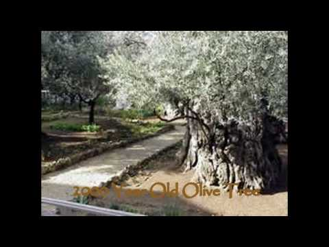 Land of the Bible Cruise - Video 2 - The Holy Land