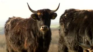 Farmer forced to cull 'Nazi' cattle
