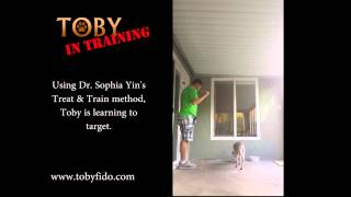 Toby In Training:  Treat & Train Game 2:  Targeting
