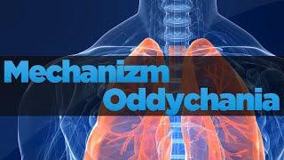Układ oddechowy człowieka