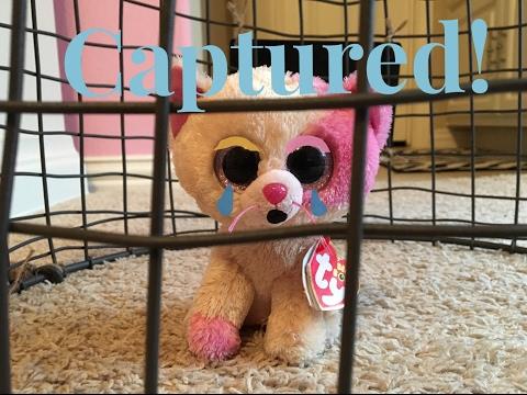 Beanie Boo's: Captured!