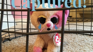 Beanie Boo's: Captured!
