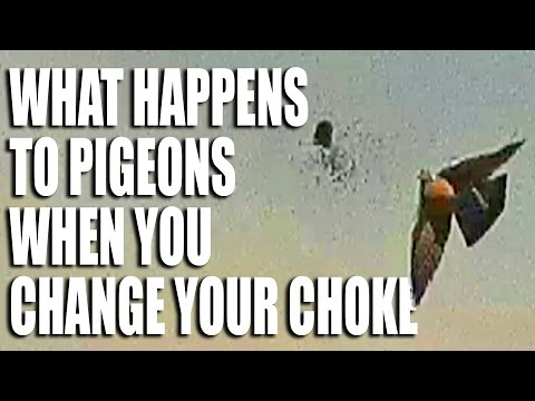 What Happens to Pigeons when you Change your Choke