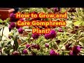 Summer and Rainy Season Flower || How to grow and care Gomphrena Plant?