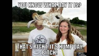 Best Hump Day Memes - Volume 2