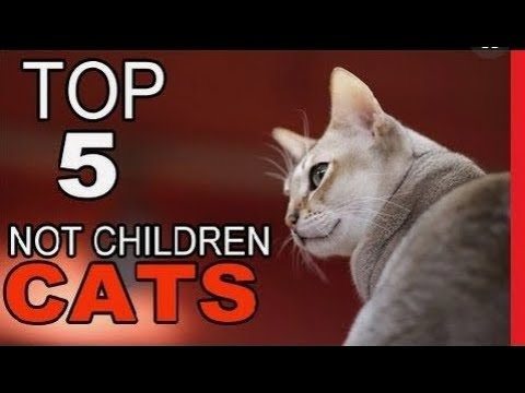 Top 5 Cat Breeds Not Recommended For Children