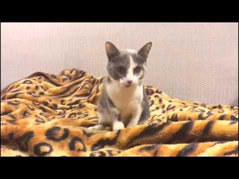 Вопрос: Почему бродячие коты и кошки так мало живут, умирают от болезней?