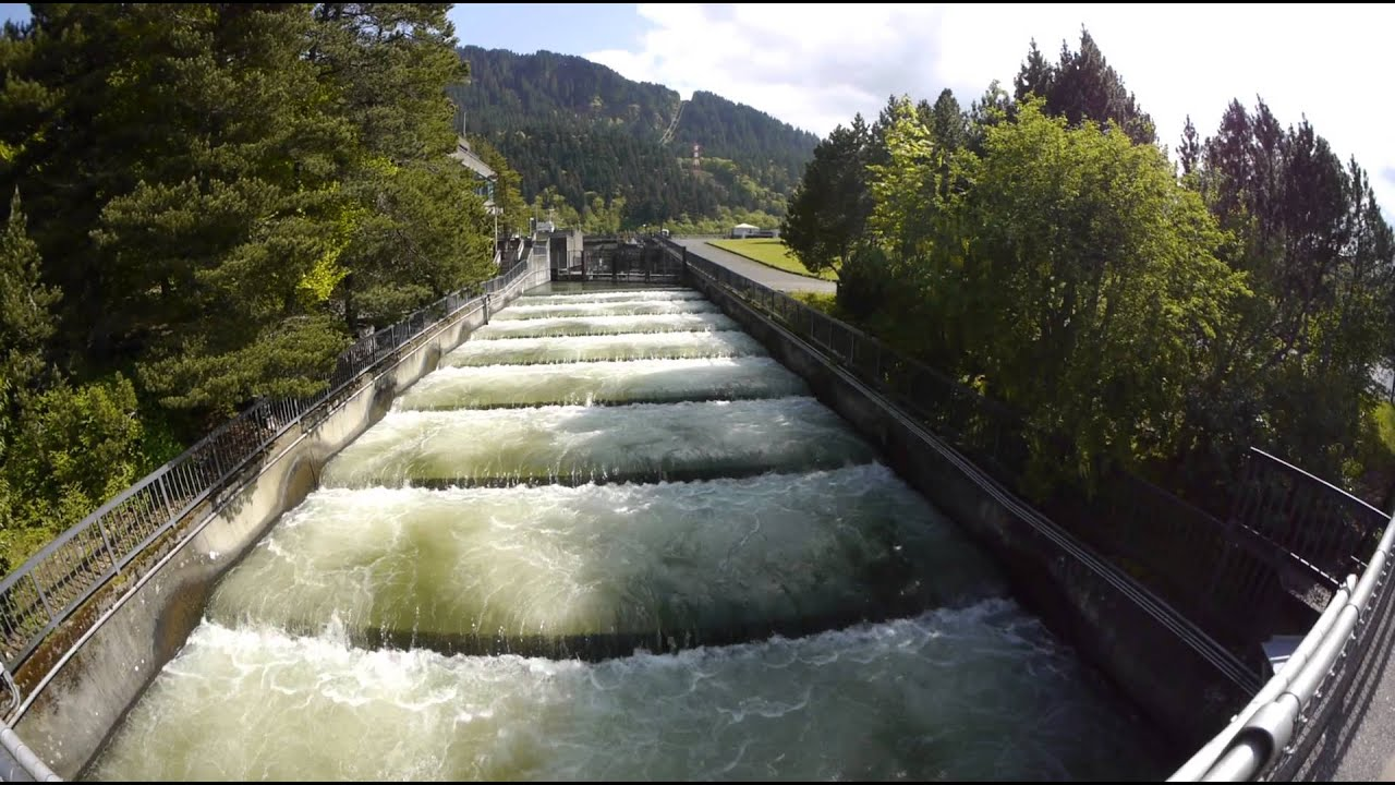 Fish ladder bonneville dam oregon 4 30 13 youtube for Bonneville dam fish count