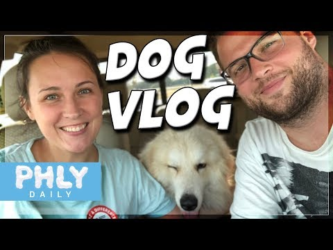 Rescuing the starving stray dog, 'Puppoe' | Dog Rescue Vlog
