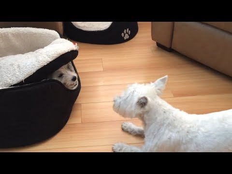 Heather Burnside - Paw Purr Azzi: A Hilarious Game Of Hide And Seek