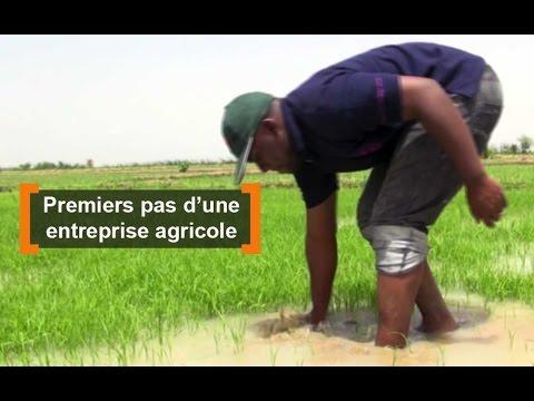 Mali : Premiers pas d'une entreprise agricole