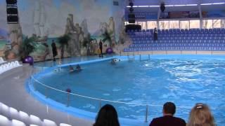 Дельфины.Отдых.Донецк.(, 2014-01-16T21:26:41.000Z)