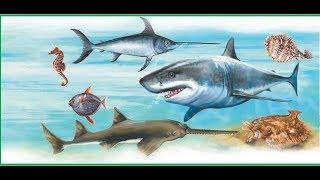 Рыбы-инструменты. Развивающий мультик для детей